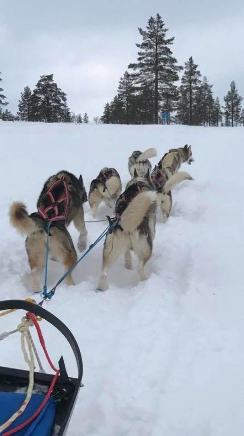Hårda och igenblåsta spår på polardistans