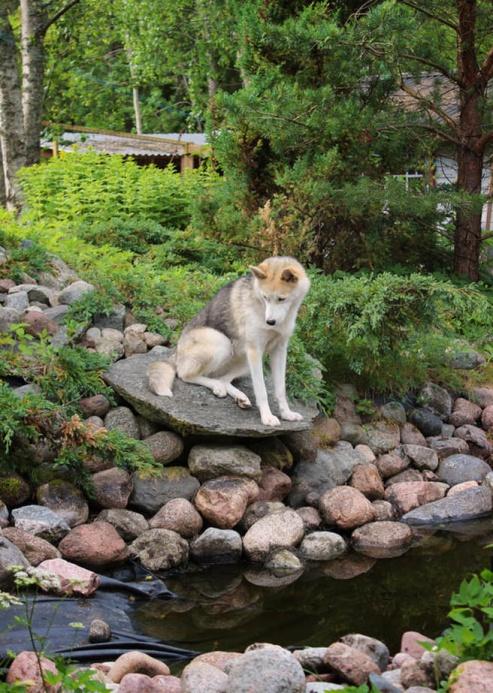 Ratchel har alltid älskat området kring dammen här hemma. Det är populärt att balansera på stenarna, leka tafatt i buskagen och vila i skuggan. Numera är dammen tömd och istället har den blivit en ypperlig sänka att gräva i, tycker hundarna.