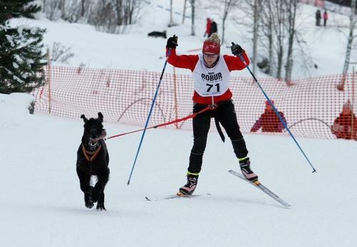 Linkörning 1 hund (kort) Foto: Anna Persson