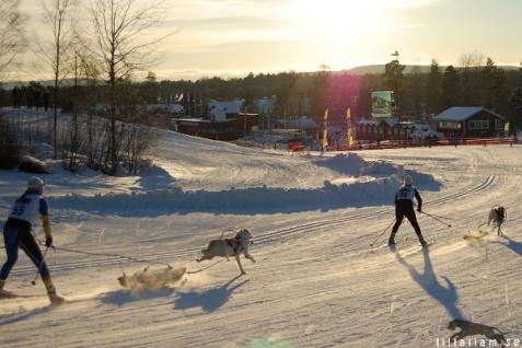 Pulkastil 1 hund (kort alt combined) Foto: Anna-Carin Lönn