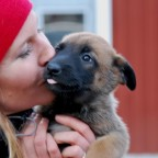 Föreläsning. Hur man maximerar hundens uthållighet inför tävling. (alla disicpliner). 3/9.