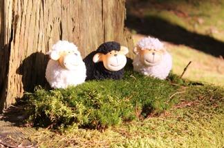 Tre söta får - Tre får