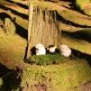 Tre söta får
