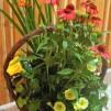 Planteringskorg
