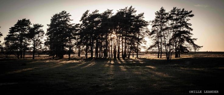 Heden/Moorland