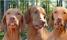 Föreläsning kring hundtandvård