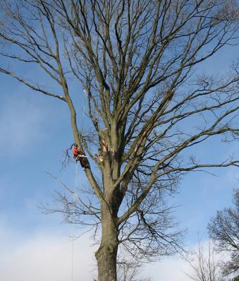 Hjälp med träbeskärning, kronreducering & kronstabilisering? Martins Trädservice i Varberg hjälper dig med träbeskärning i Varberg, Falkenberg, Kungsbacka i Halland.