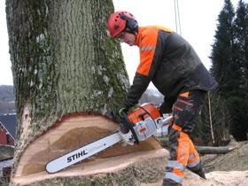 Hjälp med trädfällning av isa certifierad arborist i Varberg, Falkenberg & Kungsbacka i norra Halland