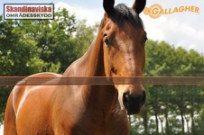 elband för häst