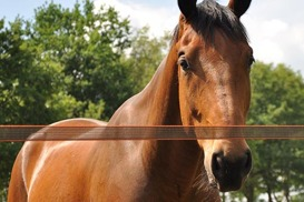 häststaket