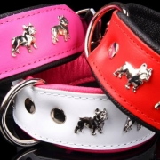 Fransk Bulldogg Svart-Röd