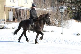 Thor från Väsby Stuteri f- 10