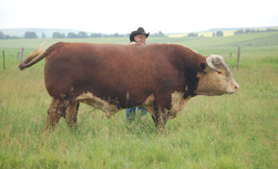 Doug Finseth together with one of the herd sires