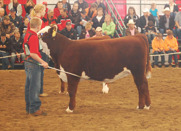 Reserve Grand Champion Female: Remitall Marvel ET 12Z. Born 2012. By Harvie Tailor Made ET 7W owned by Remitall West, Olds.