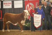 Reserve Grand Champion Bull: GH 7101 Rock Solid 5Z. Born 2012, By UP STCC Nitro 1ET owened by Hirsche Herefords, High River.