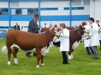 Judging at the Royal Highland Show