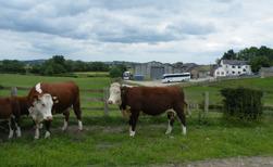 Auckvale farm