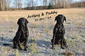 Ardbeg & Paddy