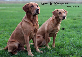 Izar & Runner