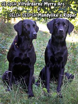 Myrra & Rippe