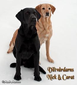 Nick & Carat
