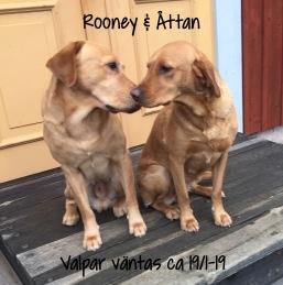 Rooney & Åttan