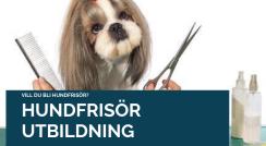 Hundfrisörutbildning Bas & Påbyggnad -