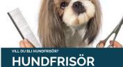 Hundfrisörutbildning Bas & Påbyggnad