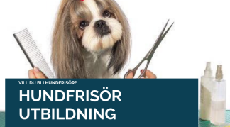 Hundfrisörutbildning Online Paket 3 -