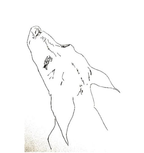 Nosework nybörjare - [Nosework nybörjare start 15 mars
