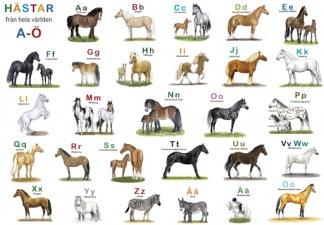 ABC tallriksunderlägg, hästar -