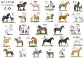 ABC tallriksunderlägg, hästar