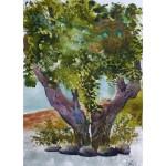 Olivträd, 40x50 cm, SEK 1800