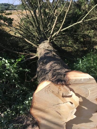 Vill du ha hjälp med trädfällning i Halmstad, Falkenberg, Halland? Kontakta Kvibille Stubbfräsning för professionell trädfällning…