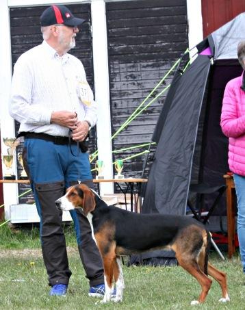 ( Foto Leif Bäckström ) Harklockans Finn-Azzi på utställning i Råneå domare Leni Finne dömde Exelent och CK och bästa junior tik.