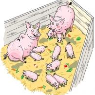 Glada grisar Natur & Kultur