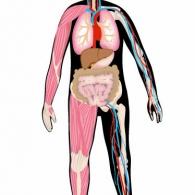 Människan, knoppen och kroppen, Natur & Kultur