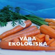 Ekologiska grönsaker och morötter