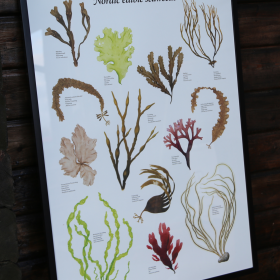 TÅNGAFFISCH | SEAWEED POSTER