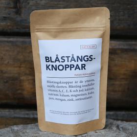 BLÅSTÅNGSKNOPPAR | BLADDERWRACK