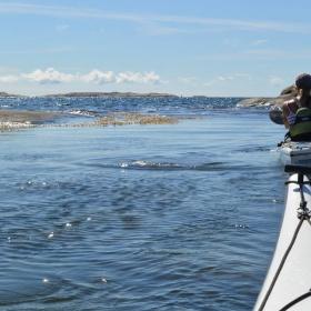 TÅNGPADDLING HALVDAG | SEAWEED KAYAKING half day