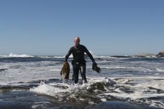 TÅNGDAG | SEAWEED FORAGING & COOKING CLASS - 5/7 -19, kl 11-17.30
