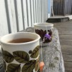 ALGTÈ SUN CANDY | ALGAE TEA