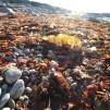 SEAWEED SAFARI (English speaking)