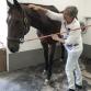 Massage med Skånsk Hästmassage