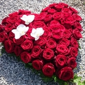 Hjärta 1