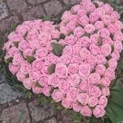 Hjärta 14