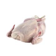 Färsk hel kyckling