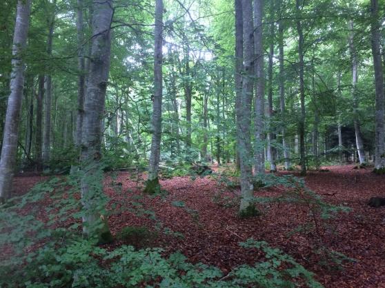 Sveriges största ekskog, Visingsö