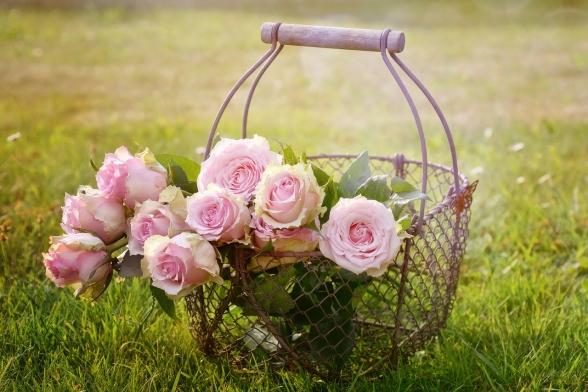 Attraktionslagen med rosa rosor